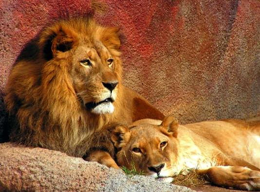 灵命日粮: 犹大的狮子