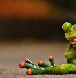 frog-1672866_640