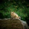 灵命日粮:惊恐的花栗鼠